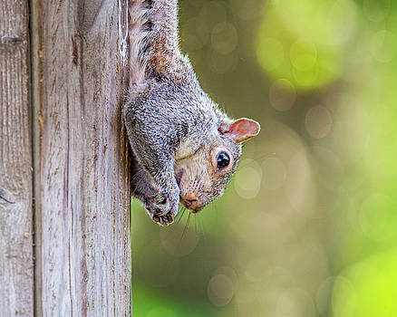 Just Hanging Around by Cathy Kovarik