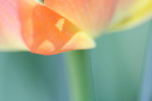 Just Peachy by Rachelle Johnston
