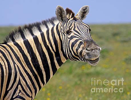 Just smile - Zebra, Africa wildlife by Wibke W