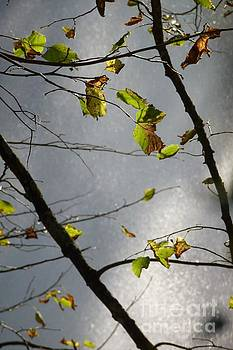 Just Some Leaves 2 by Jean Bernard Roussilhe