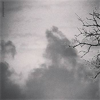 Just Some #moody #morning #cloudporn In by Austin Tuxedo Cat