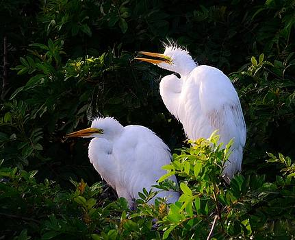 Patricia Twardzik - Juvenile Great Egrets Hanging Out at the Rookery