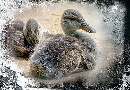 Juvenile Mallards With Textured Edge by Brian Wallace