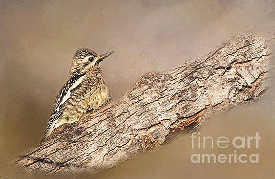 Juvenile by Pam  Holdsworth