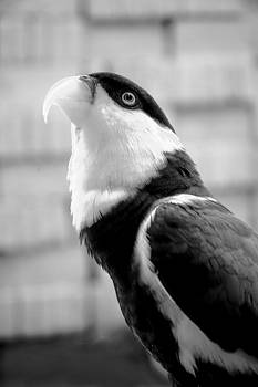 Kakaktua Bird by Mario Bennet