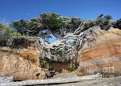 Kalaloch Tree of Life by Martin Konopacki