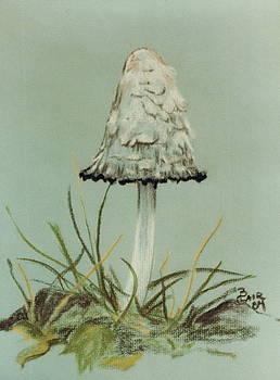 Kaldari Copvinoid Mushroom by Barbara Keith
