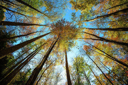 Kaleidoscope - Looking Up in the Great Smoky Mountains by Southern Plains Photography