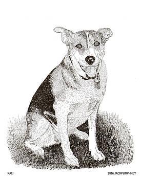 Jack Pumphrey - Sweet  Rescue dog