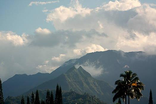 Diane Merkle - Kaliko Mountains