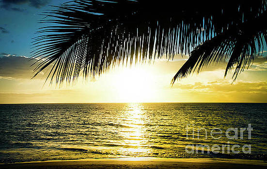 Kamaole Tropical Nights Beach Gold Palm Silhouettes by Sharon Mau