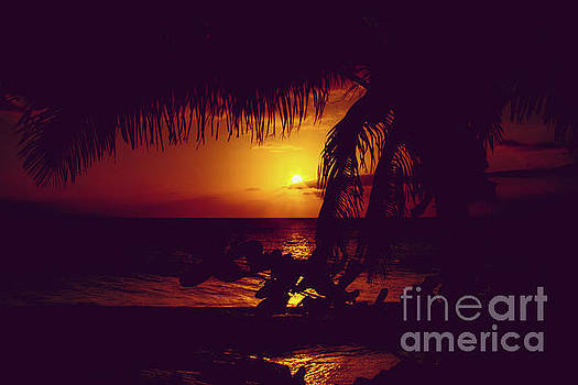 Kamaole Tropical Nights Sunset Gold Purple Palm by Sharon Mau