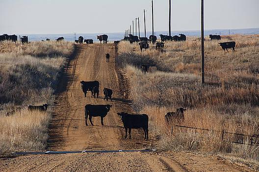 Kansas Road Block by Anita Hohl