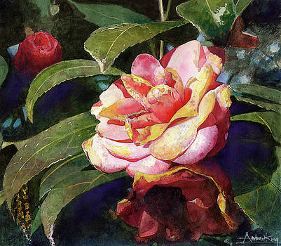 Karma Camellia by Andrew King