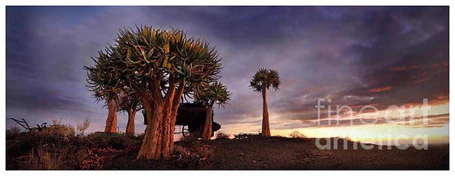 Karoo Desert 2 by Michael Edwards