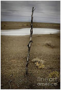 Karoo Desert 5 by Michael Edwards