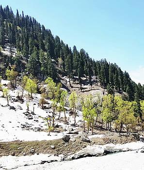 Kashmir V2 by Uma Gokhale