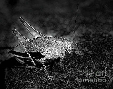 Katydid Grasshopper by Smilin Eyes  Treasures