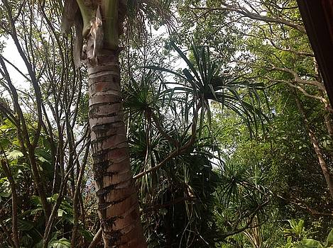 Kauai Back Yard by Cheryl Lynn Johnson