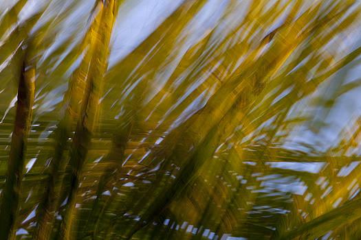 Kauai by Mary Lynn Burke