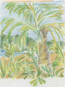 Kauai Palms by Barbara Jacobs