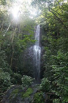 Diane Merkle - Kauai Waterfall