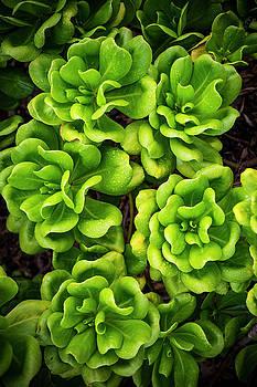 Kauai's Flora by Peter Irwindale