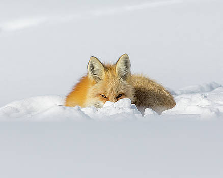 Snow Hide by Kevin Dietrich
