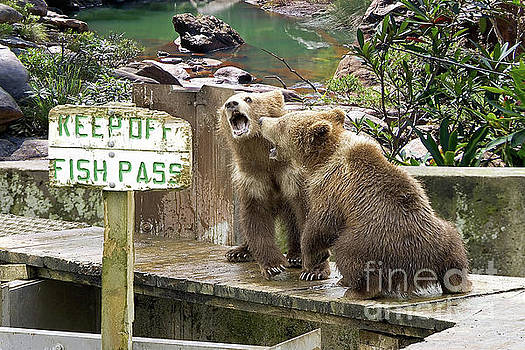 Keep Off Fish Pass  by Liane Wright