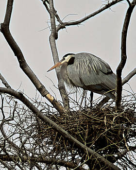 Keeping the Nest by Cindy Adams