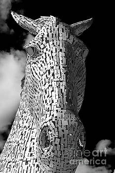 Kelpie Head by Diane Macdonald