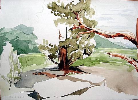 Kennedy Meadows Tree by Amy Bernays