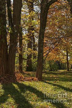 Bob Phillips - Kentucky Autumn Color