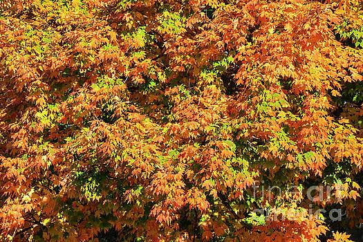 Bob Phillips - Kentucky Autumn Colors