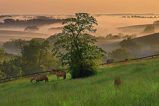 Kentucky morning sunshine. by Ulrich Burkhalter