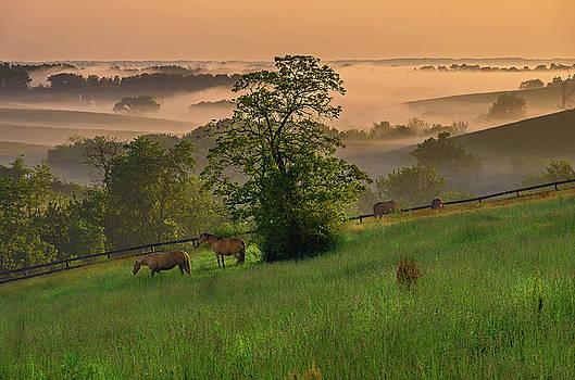Kentucky morning by Ulrich Burkhalter