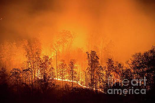 Kentucky Wildfire by Anthony Heflin