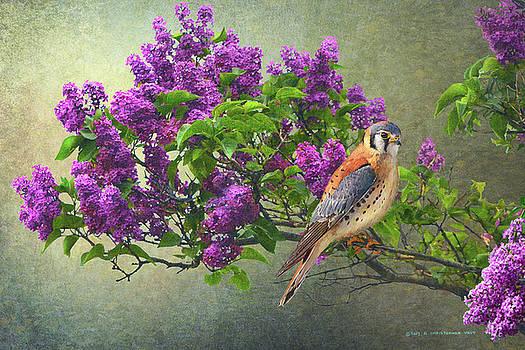 Kestrel In Lilac by R christopher Vest