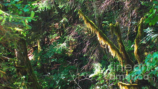 Ketchikan Green by Laurianna Taylor