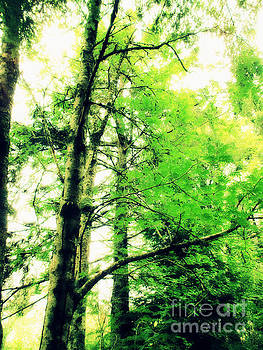 Ketchikan Trees by Eve Penman