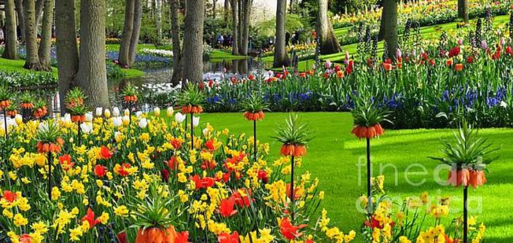 Keukenhof ornamental garden. by Akshay Thaker-PhotOvation