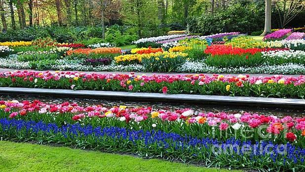 Keukenhof Tulips ornamental garden  by Akshay Thaker