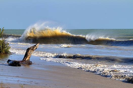 Key Biscayne Shorebreak by Robert Lyon