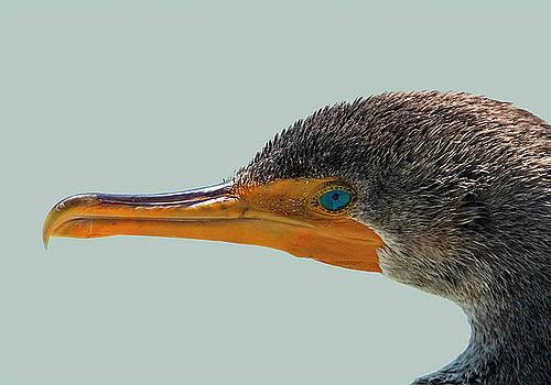 Key West Cormorant Portrait by Bob Slitzan
