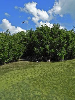 Key West Mangroves 4 by Bob Slitzan