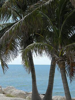 Key West Palms by Audrey Venute