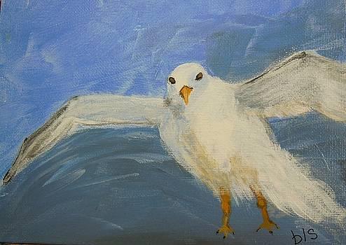 Key West Seagull by Brenda L Smith