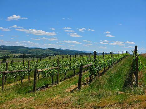 King Estate Vineyard by PJ  Cloud