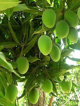 King of fruits by Karuna Ahluwalia