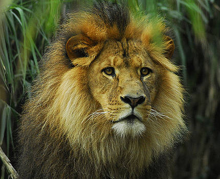 King Of Taronga by Al Junco